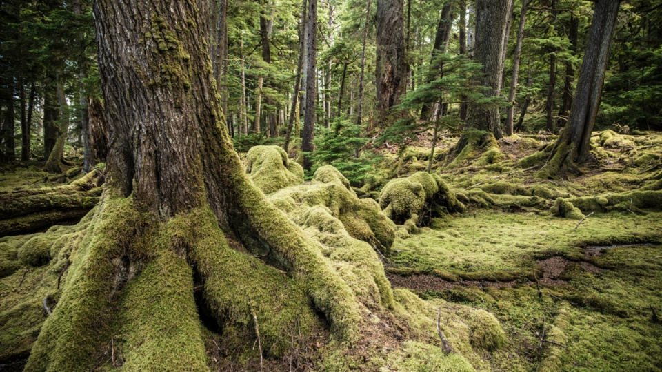 20130724-Haida-Gwaii-3182
